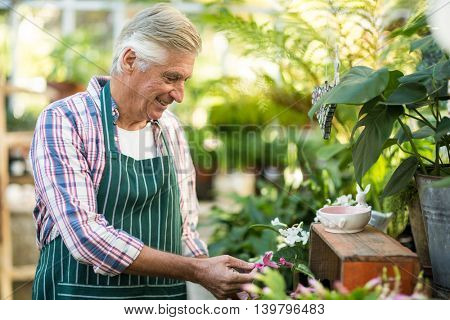 Male gardener smiling while examining plants at greenhouse