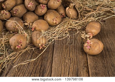 potatoes with sprouts for spring planting on the old wooden background