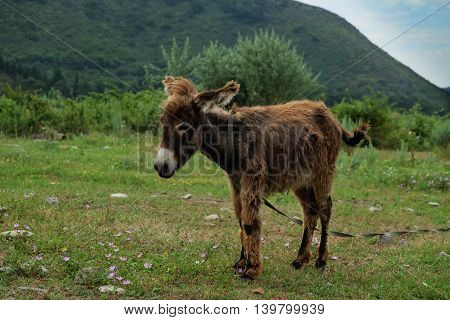 Young donkey grazing on the green grassland