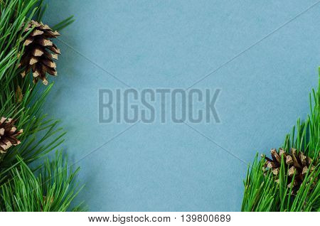 Green pine branches with cones on a blue background
