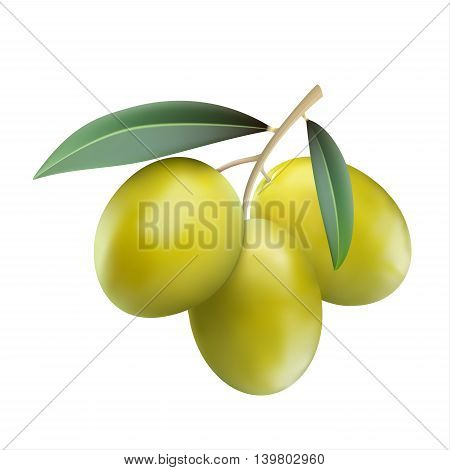 Green olives with leaves isolaten on white background realistic vector illustration