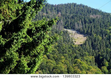 Landslide in the Carpathian mountains to Synevyrskiy pass near forest.