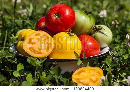 a fresh colorful tomatoes in bowl outdoors