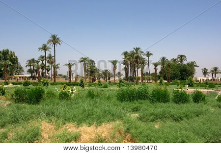 Egyptian oasis near the Dendera temple. Africa.
