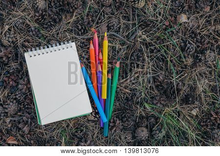 Notebook And Pile Colorful Pencils On Forest Lay