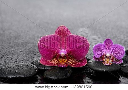 Pink with red orchid with therapy stones