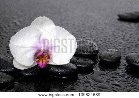 Still life with pink orchid on wet pebbles