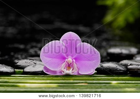 Thin bamboo grove background with orchid ,stone on wet background