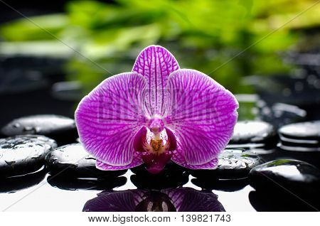 Pink orchid with bamboo leaf and stones