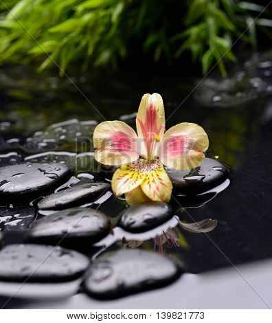 Beautiful orchid with plant and therapy stones
