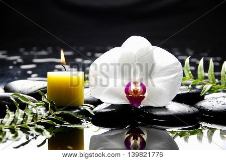 White orchid with fern on pebbles on wet background