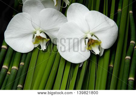 orchid on green leaf with grove background