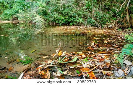 Small lake with fallen leaves in the jungles Khao Sok National Park Surat Thani Province Thailand.