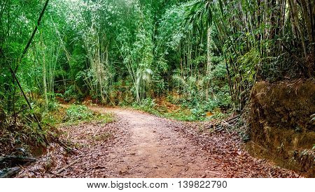 Walking trail in Thai tropical forest Khao Sok National Park Surat Thani Province Thailand. Soft Focus.