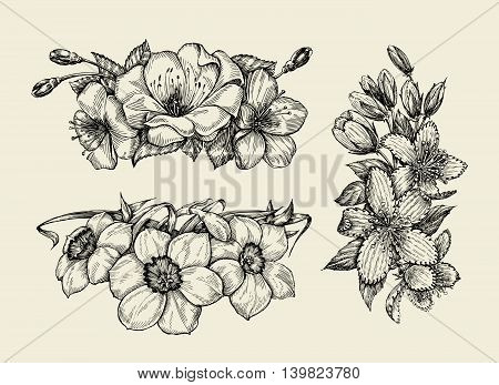 Flower. Hand-drawn sketch tutsan, hypericum, narcissus, cherry flowers Vector illustration