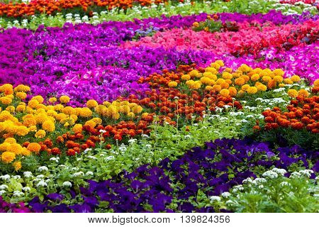 Background of the flowers, multicolored flowers background