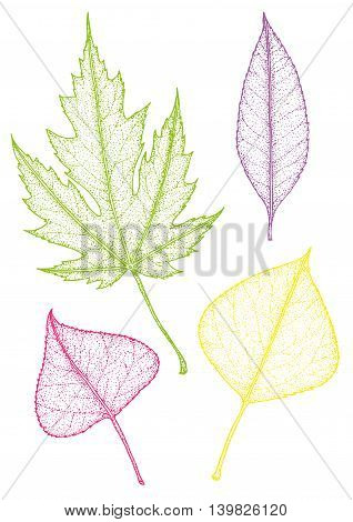 Set leaves of multicolored. Vector illustration. EPS 10.