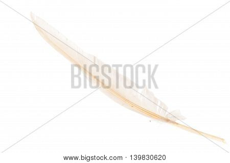 White Feather On White