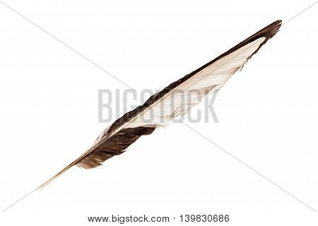 Black And White Feather On White