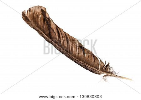 Brown Feather Over White