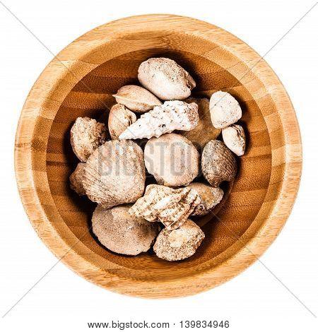 Bowl Full Of Shells