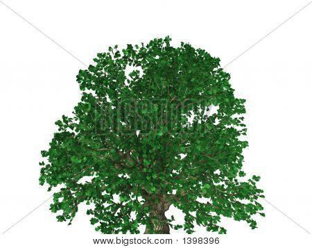 Oakfull