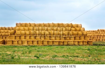 Agricultural field where harvested cereals and straw collected in a stack. summer