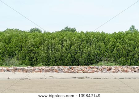 Mangrove forest in sea shore aerial roots at Phetchaburithe Gulf of Thailand