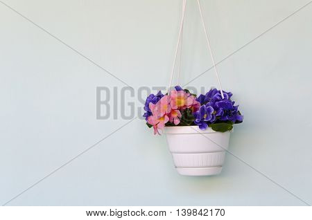 Pot of flowers of violets against on a wall
