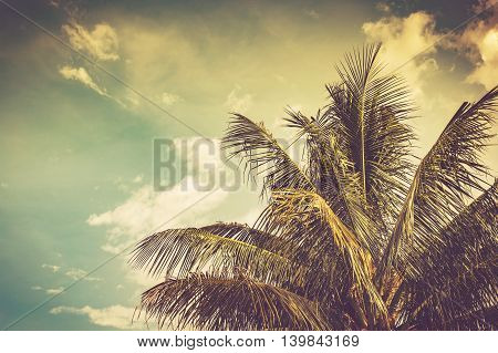coconut palm tree and sky in summer with vintage toned.