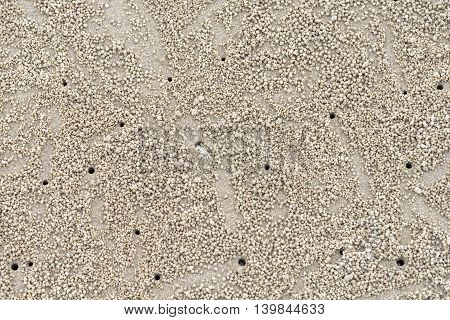 image of Ghost Crab habitat on sand for background