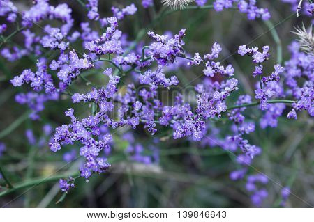 blue wild flowers and green foliage background