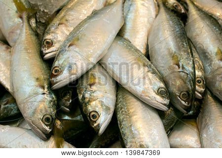 fresh mackerel fishes in local fish market, food background