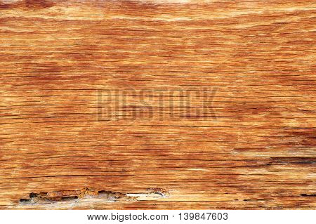 old oak plank texture ready for your design (Quercus robur)