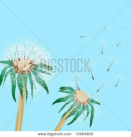 Pair of two beautiful dandelions. Vector illustration.