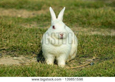 white rabbit sitting in a green grass, nature wildlife