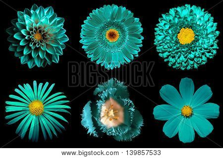 Mix Collage Of Turquoise Flowers 6 In 1 Isolated On Black