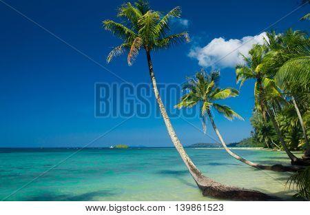 Green Getaway Palm Panorama
