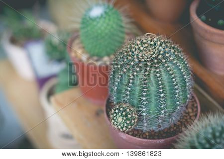 Little cactus plant in the flower pot. cactus. Various cactus plants. cactus plants in retro effect image.(selective focus)