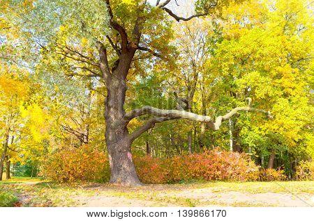 Nostalgic Scene Trees of Yellow