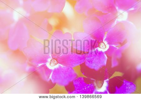 Beautiful purple flowers are on orange background.