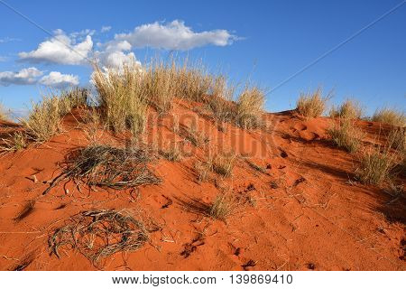 Kalahari sand dune with traces of animals in desert at sunset time
