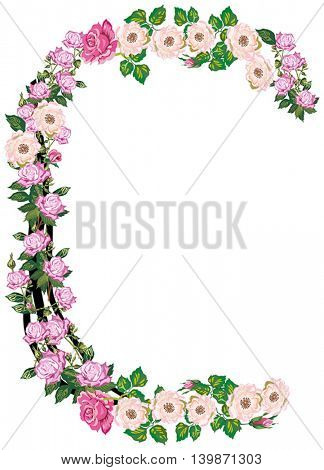 illustration with letter C from rose and brier flowers isolated on white background