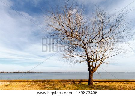 Leafless tree alongside a lake at dawn in Argentina