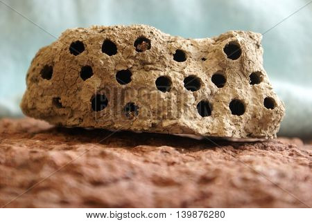 A closeup view of a mud wasp hive resting on a red rock.