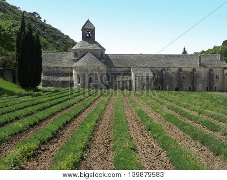 Senanque Abbey lateral view and perspective of lavander plantation