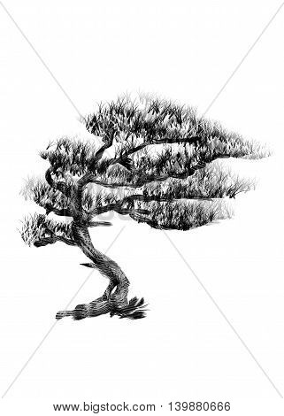 Pine. Drawing tree on white bacground. Black silhouette wood.