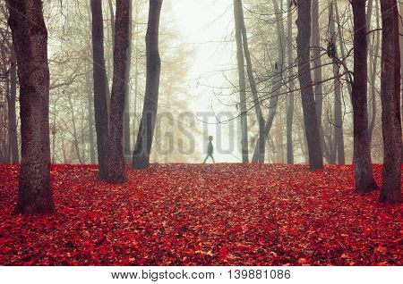 Autumn nature -foggy autumn view of autumn park in dense fog with spectral silhouette among the trees. Autumn landscape with autumn trees and red dry fallen leaves. Autumn park in dense autumn fog.