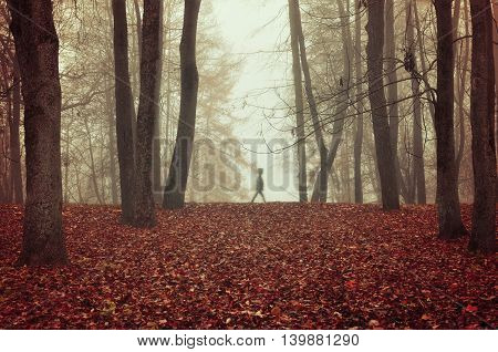 Autumn nature -foggy autumn view of autumn park in dense fog with ghostly silhouette- autumn landscape with autumn trees and red dry fallen leaves. Autumn park in dense autumn fog.