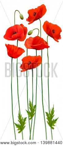 Bunch of poppies. Flower background. Vector.